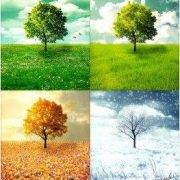 Vivaldi Dört Mevsim'e bakış 1