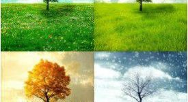 Vivaldi Dört Mevsim'e bakış 2